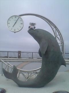 イルカさんと